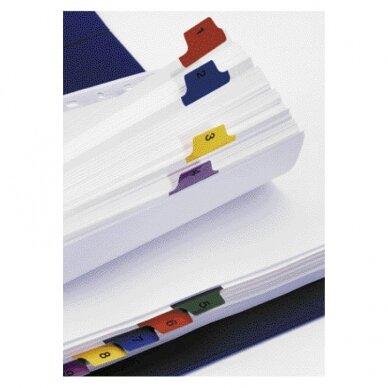 Kartoniniai spalvoti skiriamieji lapai ESSELTE, 1-12, A4 2